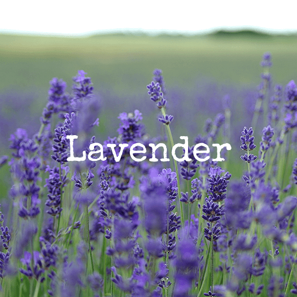 Lavender Essential Oils From doTERRA and High Altitude Living