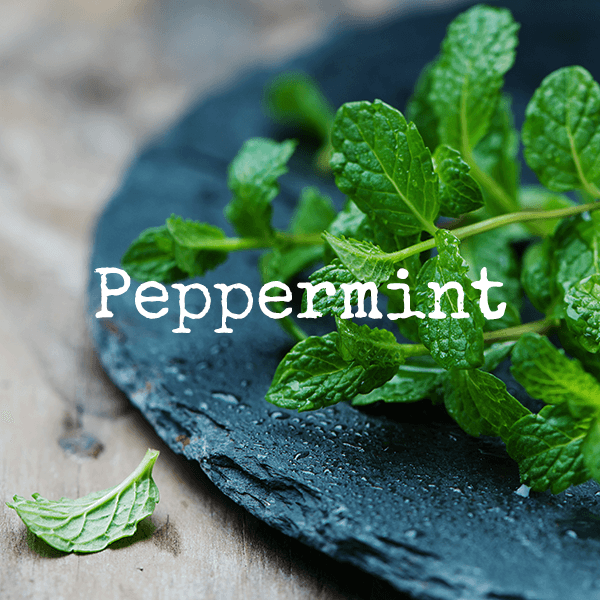 Peppermint Essential Oils From doTERRA and High Altitude Living